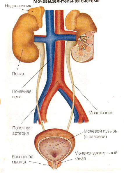 состав тройчатки эвалар от паразитов