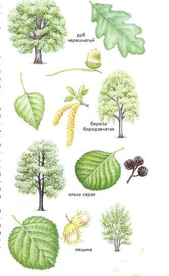 что за дерево по листьям электродов для сварки