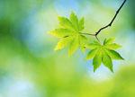 зачем деревьям листья